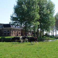 Friesvleespakket.nl